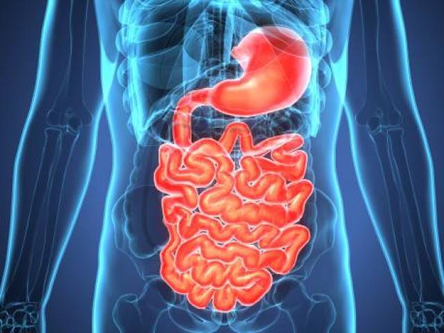 Séance d'ostéopathie et traitement des troubles digestifs